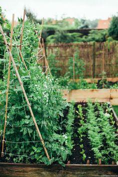 Trenes un jardín #frutas #vegetales