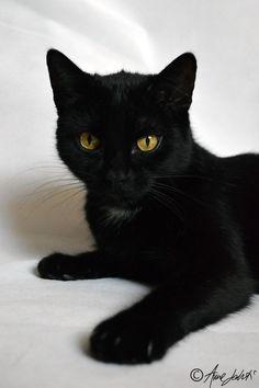 Black cat . L o v e ♡