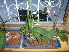 Szobanövény-ápolás télvíz idején - Megyeri Szabolcs kertész blogja Container Gardening Vegetables, Succulents In Containers, Container Flowers, Container Plants, Vegetable Gardening, Orchid Plant Care, Orchid Plants, White Bugs On Plants, Gardens