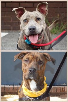 Come out and meet Betty and Nina and others tomorrow, we will be at the Petsmart at 830 Pelham Pkwy, Pelham, NY 10803  from 11 am - 1 pm Cross Streets: Between Boston Post Rd and Secor Ln (914) 235-0796