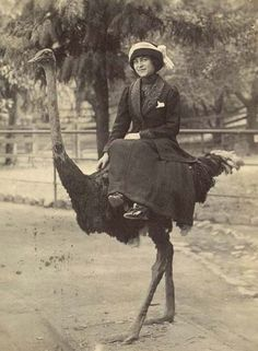 vintage everyday: A Victorian Woman Riding Her Ostrich