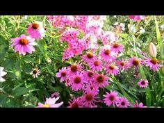 ╭დ╯❀☀︎My beautiful flowers in the golden hour☀︎❀╭დ my new video is up please subscribe and share thanks!