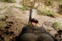 przejażdżka na słoniach