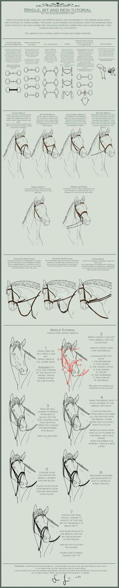 Bridle, Bit and Reins Tutorial. I am a Hackamore person the most! :D