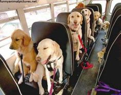 Your Bus Ride To Work Explained By The Cutest Animals