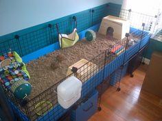 Nice, roomy guinea pig cage.