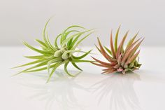 How To Make Your Own Succulent Corsage