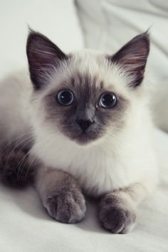 Beautiful kitty - I want one!