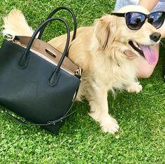 Fashion hafík  Čo říkate?  #jenpravakuze #pravakuze #sledujite #hafik #goodmorning #f4f #fashion #fashionista #fashionblogger #glamour #dog #doglover #kabelky #bag #sunnyday #sunset #emotys