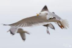 Zima nad morzem / fotorelacja.com Animals, Animales, Animaux, Animal, Animais