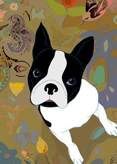 a curious Boston Terrier....