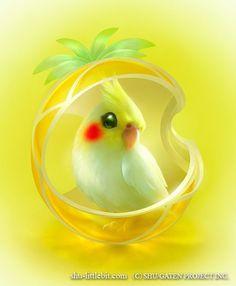 Cool : Oiseaux Exotiques