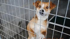 Please help the animals brought to the Taylor County Animal Shelter in Kentucky by going to this link and signing the petition  http://www.change.org/petitions/eddie-rogers-judge-executive-of-taylor-county-allow-rescue-workers-back-inside-taylor-county-animal-shelter