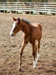 Filly 2012