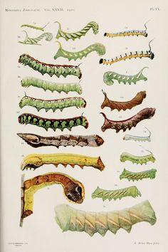 v. 27 (1920) - Novitates Zoologicae. - Biodiversity Heritage Library