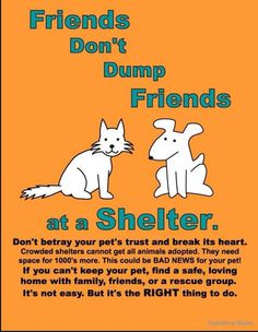 FOREVERHOME PET RESCUE - Twitter Search