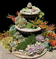 Suculentas cactus, desert landscapes, jardins áridos, canteiros de suculentas, arranjos, terrários de suculentas.