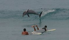 Surfing with dolphins - Byron bay