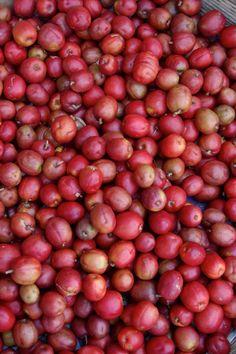 Frutas de estación en El Salvador: Jocotes #Frutas #ElSalvador  Visita: http://kitchencollections.com.sv/blog/postre-con-jocotes/