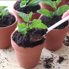 This potted plant packs a surprise treat.