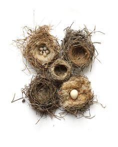 'what is home?' | Birds nests found in vineyards in Autignac, Languedoc, France | Mary Jo Hoffman