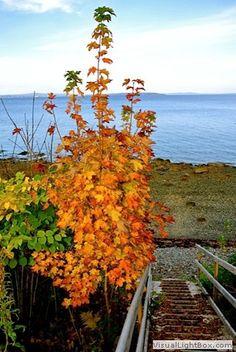 2013-10-25 Peak Season, photographed by Deanna Wolfire.