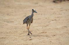 Bird on the beach Wildlife, Bird, Beach, Photos, Animals, Pictures, Animales, The Beach, Animaux