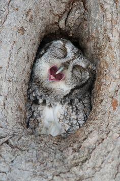 Ahhhh que sueño
