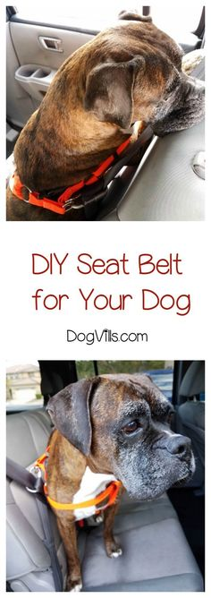 Keep your pooch safer during car rides with our clever and simple DIY dog seat belt!