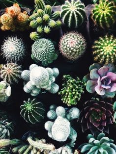 A cactus is a superb means to bring in a all-natural element to your house and workplace. The flowers of several succulents and cactus are clearly, their crowning glory. Cactus can be cute decor ideas for your room. Plants Are Friends, Cactus Y Suculentas, Cacti And Succulents, Cactus Planters, Cactus Cactus, Cactus Decor, Cacti Garden, Succulents Tumblr, Garden Boxes