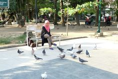 Feeding of birds