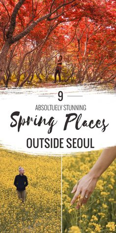 9 Absolutely Stunning Spring Places Outside Seoul - Hedgers Abroad South Korea Seoul, South Korea Travel, Asia Travel, Busan, Spring Korea, Jeju Island, Journey, Culture Travel, Travel Goals