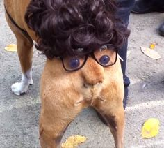 A silly costume for doggy Halloween!