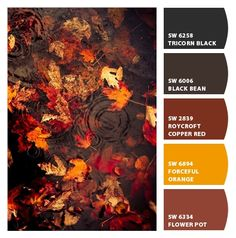Autumn rain drops and leaves. Autumn Rain, Dark Autumn, Autumn Leaves, Fall Winter, Autumn Cozy, Red Leaves, Mabon, Samhain, Belle Image Nature