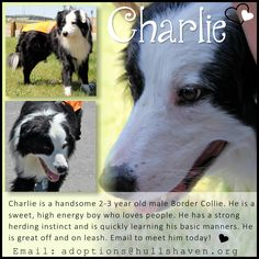 Charlie is an adorable boy looking for his forever home! Email us today to meet him