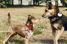 How to Train a Leash Reactive Dog