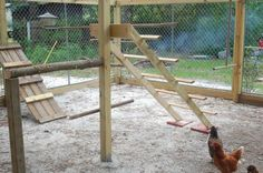 Build a jungle gym for your backyard chickens! | DIY projects for everyone!