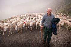 Shepherd leading sheep to summer pasture, Vicdessos Valley, France. Photography Website, Amazing Photography, Sheep Pig, Shepherds Hut, The Good Shepherd, Peaceful Life, French Country Style, National Geographic Photos, Your Shot