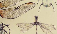 #draw   #fairyart   #cordulia #line #fineline #organic #plants #fae #faery #mushroom