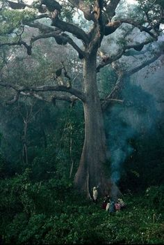 Honey Hunters of Nepal-Eric Valli National Geographic