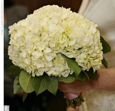 """My favorite flower is the hydrangea,"" says Pamela. Appropriately, her bouquet showcased white hydrangeas with lemon-leaf collar, with stems wrapped in pink double-faced satin ribbon."