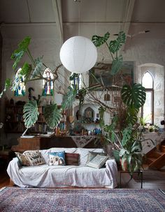 Love the cheese plant    Maybe hanging at the separation of entry and living area