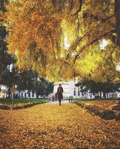 Last year autumn in Verona 😊 Photo by: @bu_khaled  #Verona #november #autumn #buongiorno #Yellow #italianlandscapes #buongiorno #goodmorning