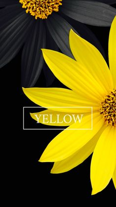Yes, I noticed. The flower is yellow. Good job. Ahem. *cough.