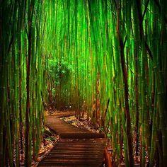 Long way to go  Love bamboo  #bamboo #goodbamboolife #wooden#furniture#furnishing #bamboo#life#good#natural#goodbamboolife#losangeles#redbull#summer#paris#miami#london#newyork#repost#share#gogreen#fasion#nature#grass @goodbamboolife
