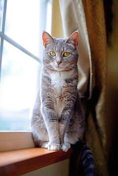 Pretty cat, in window.