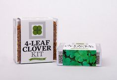Lucky 4-Leaf Clover Kit -- Grow a 4-Leafed-Clover Shamrock Garden in Your Backyard or Terrarium - St. Patrick's Green Clover Lucky Seed DIY