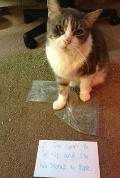 cat shaming Guilty animals that are working their way into the Hall of Shame (27 Photos)