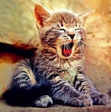 Image result for kitties