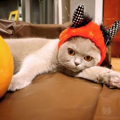 Enter @PetSmart s #MonsterCute contest on Twitter Instagram or their website with a photo of you and your pet in costume. Theyre looking for the most scary cute & trending photos! Must tag @petsmart & use #monstercute to enter! Contest ends Oct. 25 & has a $1000 cash prize! #petsmart #catsofinstagram #spon ------------------------------------ Photo from @MillaTheCat (thank you)! by cats_of_instagram